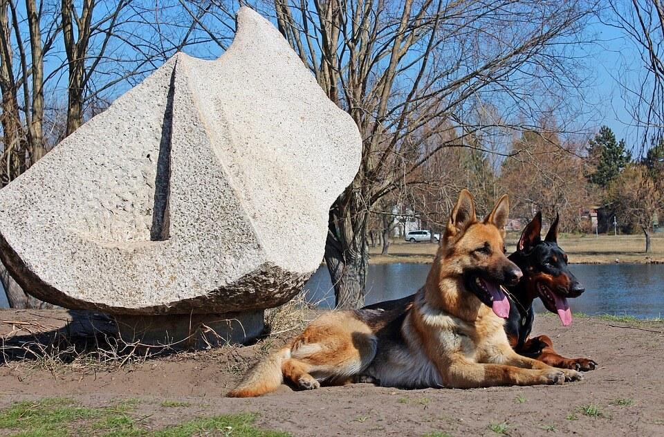 Munkakutyák - őrző-védő/szolgálati (rendőrségi: pl. tömegoszlató, drog- és robbanóanyagkereső) kutyák