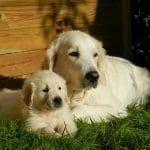Kutya ivartalanítása 1- A legfontosabb kérdések