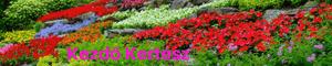 Kezdő Kertész