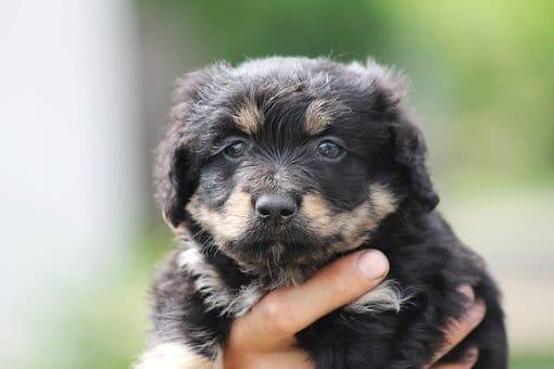 A legnépszerűbb kutyanevek 1. – választási szempontok