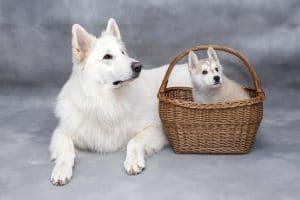 Első kutya, milyet válasszunk?