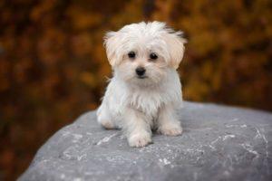 Milyen kutya való nekem?