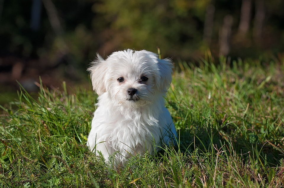 Bolognese kutya nevek, melyik illik hozzá a legjobban?