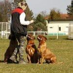 Milyen kutya való nekem 2. – A kiválasztás szempontjai