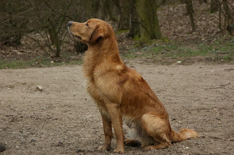 Munkakutyák - segítő-, vakvezető, rohamjelző kutyák