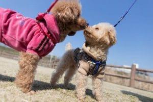 Kutya ivartalanítása