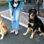 Kutyasétáltatás pórázon 4. – alap tudnivalók