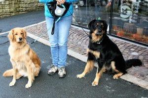 Kutya sétáltatás pórázon: póráz, futtató, szabadság
