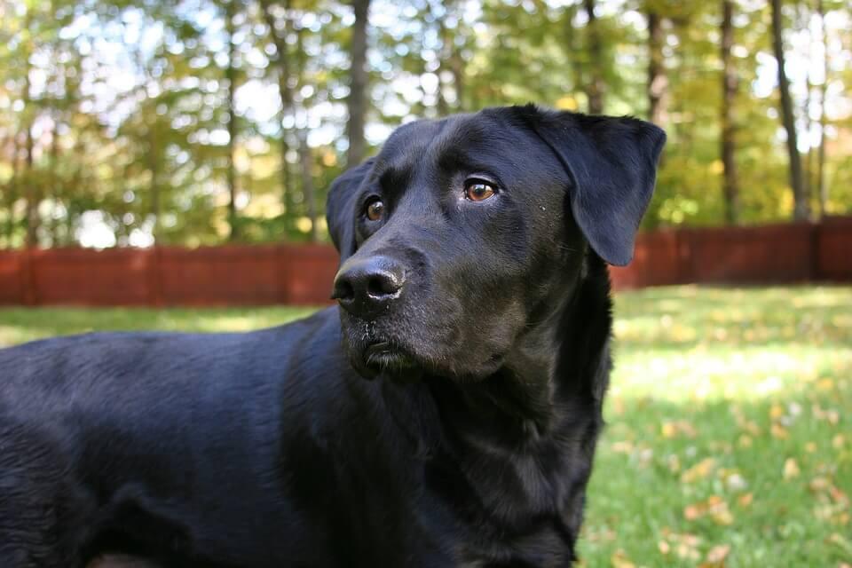 Kutya: póráz, futtató, szabadság