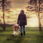 Kutyasétáltatás pórázon 1. – mi kell hozzá?