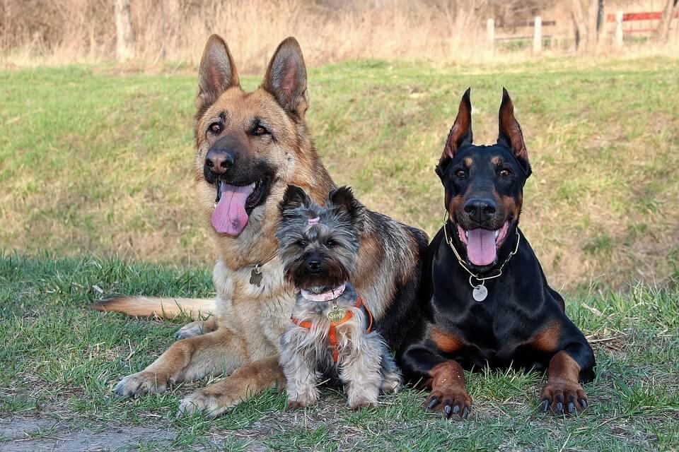 Legnépszerűbb kutyafajták