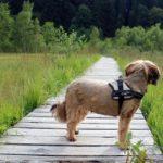 Kutya sétáltatás pórázon 3. – végre elindulhatunk