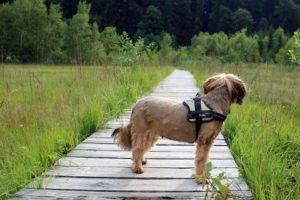 Kutya sétáltatása