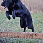 Hogyan NE tartsunk kutyát, avagy mindennapi kutyakínzások 1.