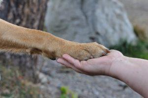 Kutya és ember