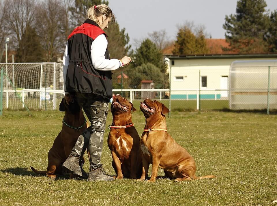 Hogyan tartsunk kutyát