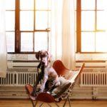 Hogyan NE tartsunk kutyát, avagy mindennapi kutyakínzások 2