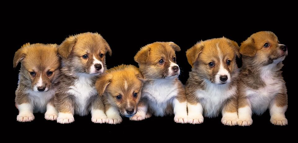 A legnépszerűbb kutyanevek 2. – milyen nevet választunk kutyánknak?