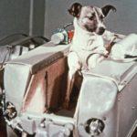 Híres kutyák – Lajka