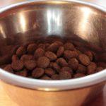 Kutya etetése 2. – miből lehet választani?
