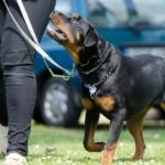 Milyen a jó kutyaiskola, avagy hogyan válasszunk kutyasulit