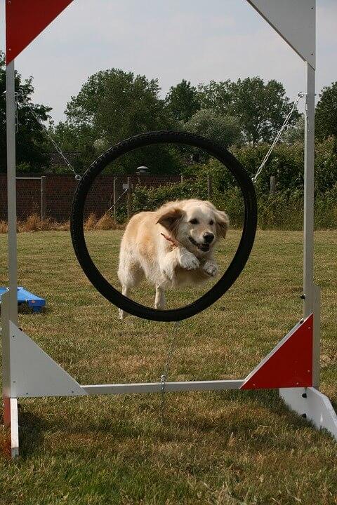 Kutya lefárasztása, szellemi lefárasztás lehet a tanulás