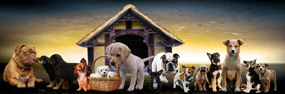 Több kutya