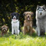 Ritka kutyanevek