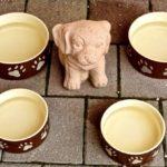 Kutya etetés 3. – mikre figyeljünk