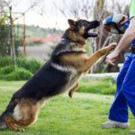 Kutya lefárasztása – ösztönbeli lefárasztás