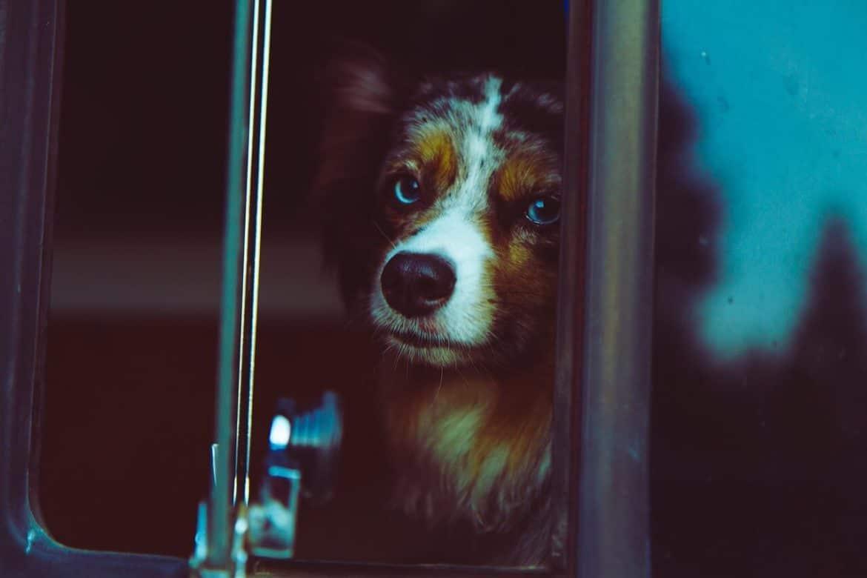 Kutya szállítása bkv-val