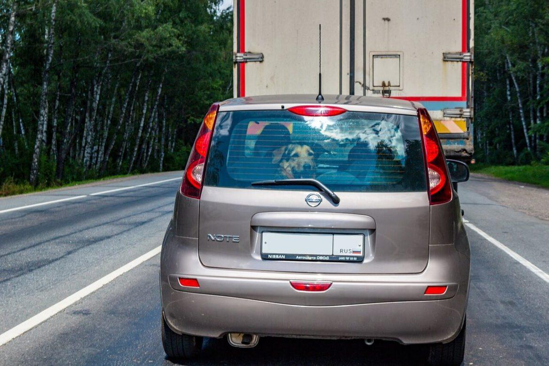 Kutya szállítása autóban