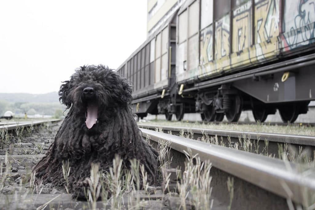 Kutya szállítása vonattal