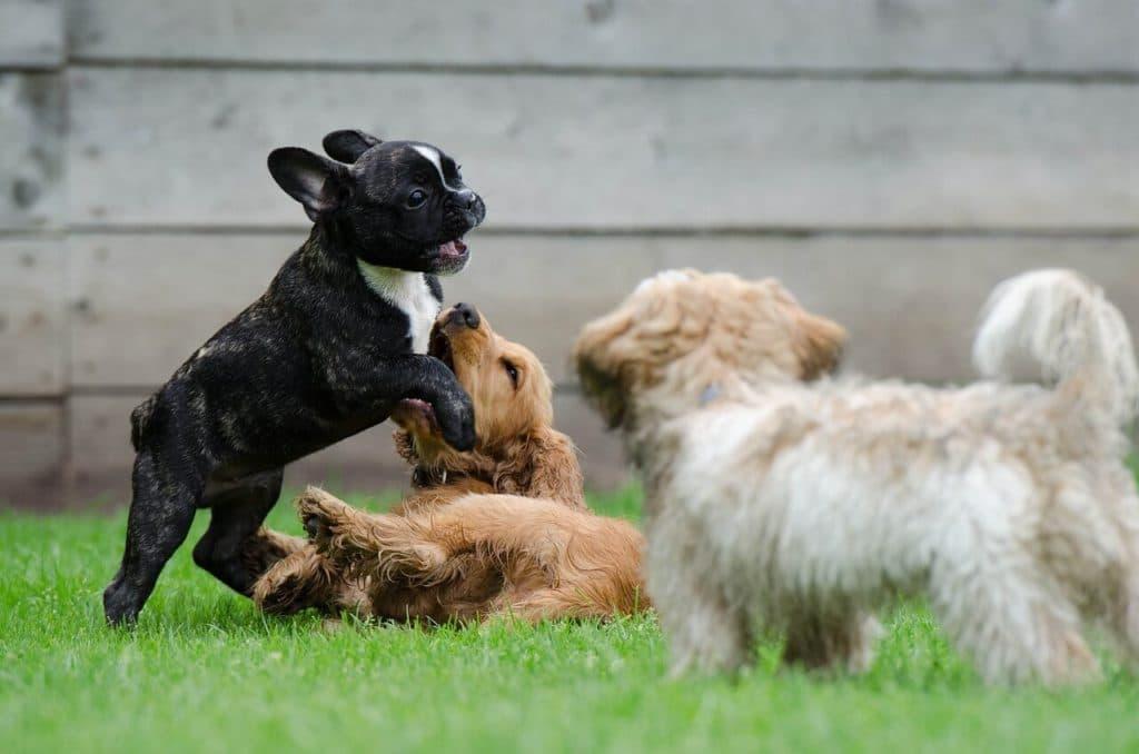 K betüvel kezdődő kutyanevek