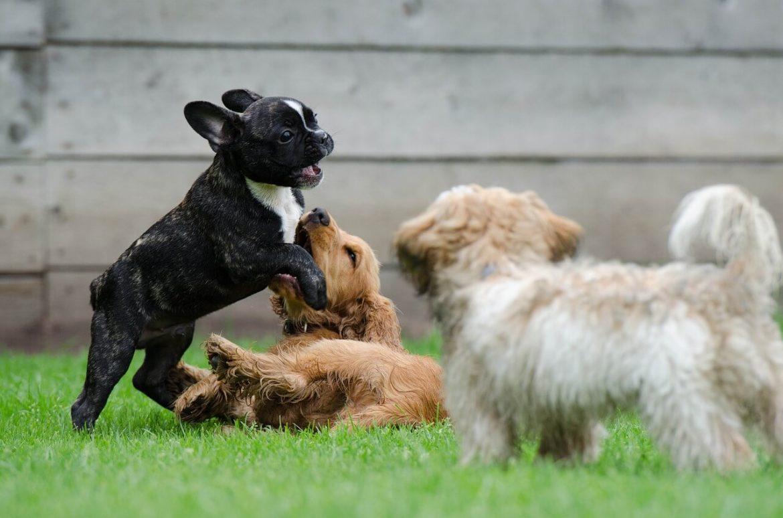 A-Á betüvel kezdődő kutyanevek
