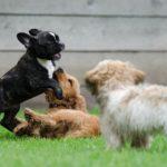 Népszerű kutyanevek