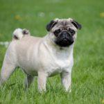 Francia kutyanevek, melyik a legnépszerűbb?