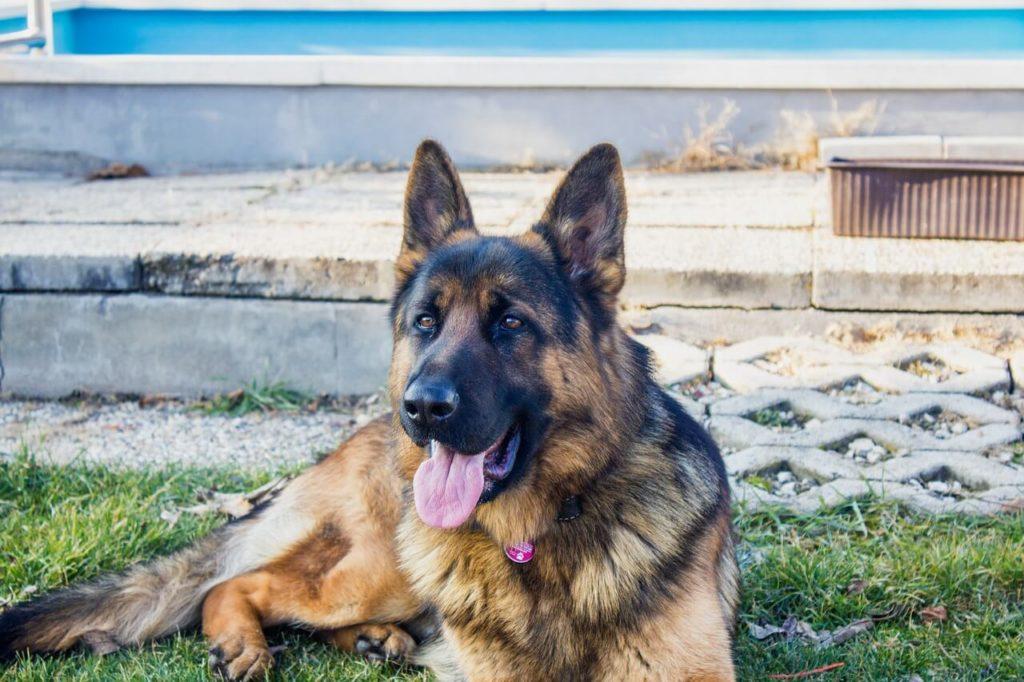 Német kutyanevek, melyik illik hozzá a legjobban?