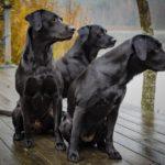 Legnépszerűbb fekete kutya nevek
