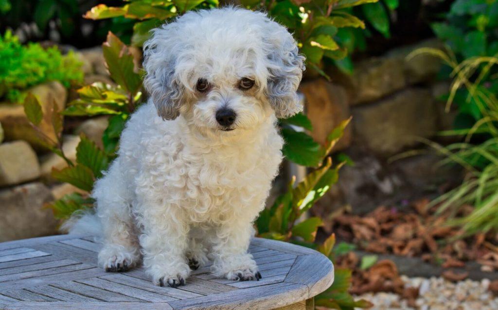 Fehér kutya nevek