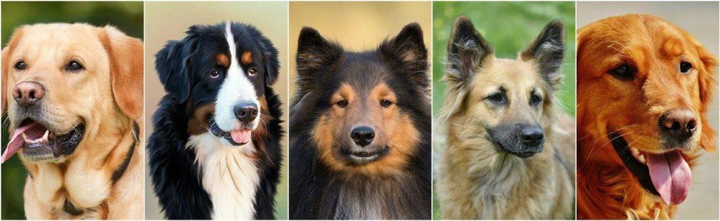 A legszebb kutyanevek, melyik illik hozzá a legjobban?