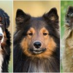 Leggyakoribb kutyanevek