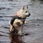 Norvég kutya nevek