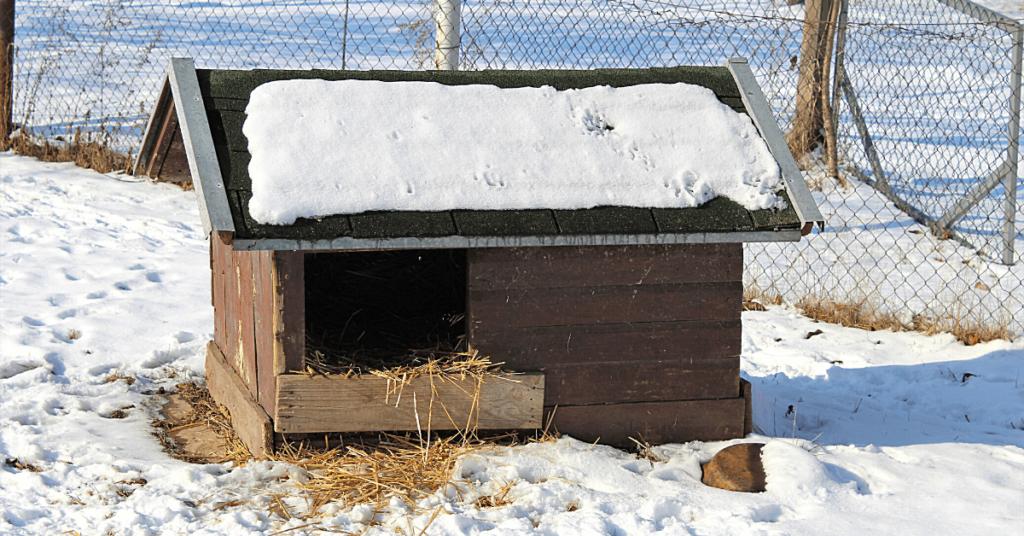 Kutyatartás télen