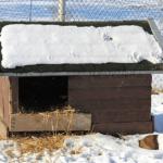 Kutyatartás télen: Így gondoskodj a kutyádról