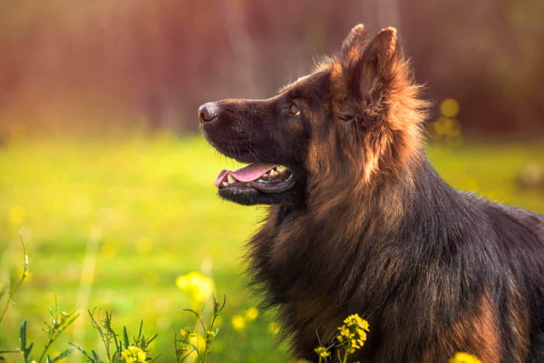 Kutyaszőr ápolása